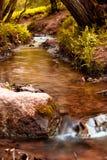 Córrego na floresta Fotografia de Stock