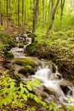 Córrego na floresta Fotos de Stock Royalty Free