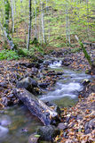 Córrego na floresta Imagem de Stock Royalty Free