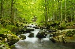 Córrego na floresta Imagem de Stock