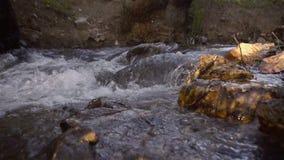 Córrego na floresta vídeos de arquivo