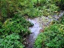 Córrego na floresta Imagens de Stock