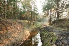 Córrego na floresta imagens de stock royalty free
