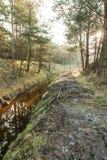 Córrego na floresta foto de stock
