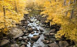 Córrego na floresta amarela no outono Imagem de Stock Royalty Free
