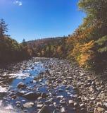 Córrego na floresta da folha Imagem de Stock
