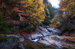 Córrego na floresta dourada da queda imagens de stock