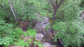 Córrego na floresta video estoque