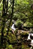 Córrego na floresta húmida Foto de Stock Royalty Free