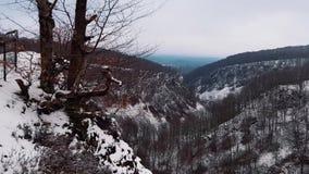 Córrego na floresta invernal vídeos de arquivo