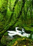 Córrego na floresta verde Foto de Stock