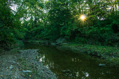 Córrego na manhã Fotos de Stock