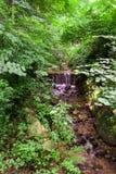 Córrego nas madeiras Fotografia de Stock