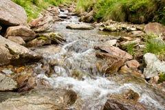 Córrego nas madeiras Imagem de Stock