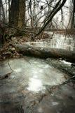 Córrego nevoento imagens de stock royalty free