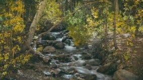 Córrego no bispo California Fotografia de Stock Royalty Free