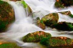Córrego no parque nacional Mavrovo Imagens de Stock