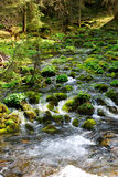 Córrego no vale Koscieliska Fotografia de Stock Royalty Free