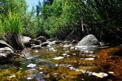 Córrego pequeno Fotografia de Stock