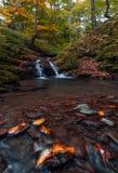 Córrego pequeno através da floresta do outono imagem de stock royalty free