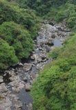 Córrego pequeno através das madeiras Imagem de Stock Royalty Free