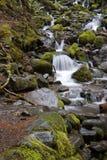 Córrego pequeno com cachoeiras Fotografia de Stock