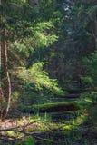 Córrego pequeno da floresta na manhã da primavera Foto de Stock Royalty Free