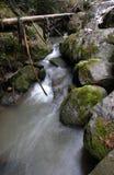 Córrego pequeno da montanha. foto de stock royalty free