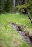 Córrego pequeno e árvore pequena na floresta em Rocky Mountain National Park imagens de stock
