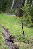 Córrego pequeno e árvore pequena na floresta em Rocky Mountain National Park foto de stock