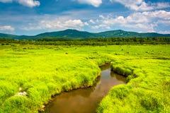 Córrego pequeno e montanhas distantes em Canaan Valley State Park, Imagem de Stock