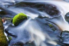 Córrego pequeno em floresta misturada Imagens de Stock