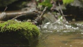 Córrego pequeno em uma floresta filme