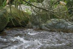 Córrego pequeno na floresta Fotografia de Stock Royalty Free
