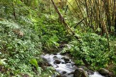 Córrego pequeno na selva imagem de stock royalty free