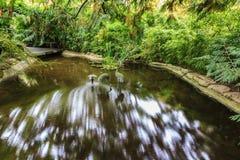 Córrego pequeno no jardim japonês Imagem de Stock Royalty Free