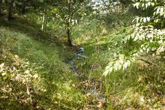 Córrego pequeno perto dele mola do ` s que corre através da floresta Imagens de Stock Royalty Free