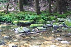 Córrego preto da montanha Foto de Stock
