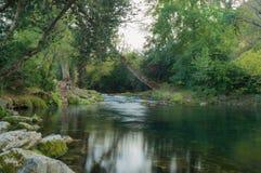 Córrego que corre através da floresta imagem de stock royalty free