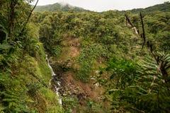 Córrego que corre através de rochas do molde verde imagem de stock royalty free