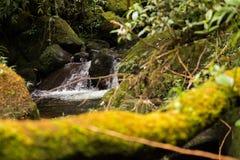 Córrego que corre através de rochas do molde verde foto de stock