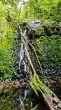 Córrego que corre através de rochas do molde verde imagem de stock