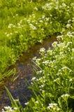 Córrego que corre através do prado Foto de Stock Royalty Free