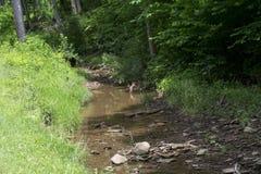 Córrego que flui da floresta imagens de stock