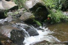 Córrego que flui rapidamente sobre rochas Otavalo Equador fotografia de stock royalty free