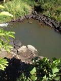 Córrego quieto do waikomo Imagem de Stock