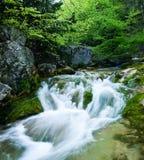 Córrego rápido. Fotografia de Stock Royalty Free