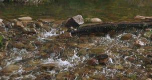 Córrego raso que conecta e que flui sobre rochas, pedras e um log filme