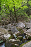 Córrego rochoso ao lado do templo de Beomeosa em Busan foto de stock royalty free