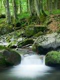 Córrego rochoso da floresta Imagens de Stock